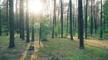 Beautiful Nature Forest Trees Green Grass Sun Woods Sunset