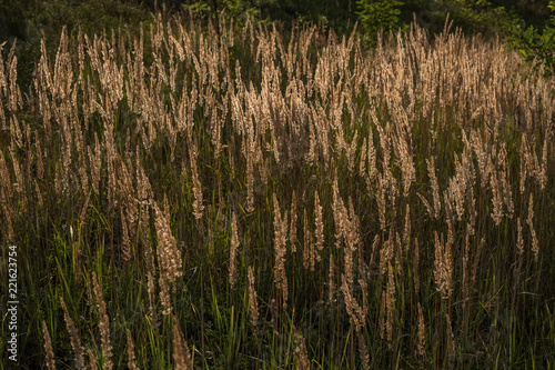 tall grass field landscape photo tall grass tall posters wall art prints buy online at europosters