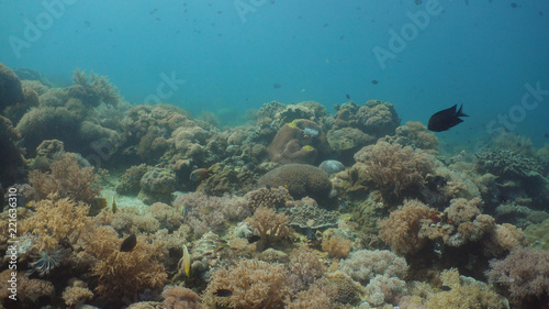 Staande foto Koraalriffen Tropical fish on coral reef at diving. Wonderful and beautiful underwater world with corals and tropical fish. Hard and soft corals. Philippines, Mindoro.