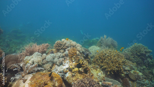 Fotobehang Koraalriffen Fish and coral reef at diving. Wonderful and beautiful underwater world with corals and tropical fish. Hard and soft corals. Philippines, Mindoro. Diving and snorkeling in the tropical sea.