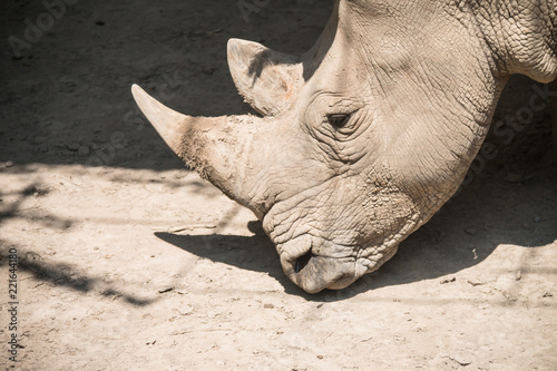 Tuinposter Neushoorn Close-up rhino