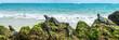 Leinwanddruck Bild - Galapagos islands marine iguanas wildlife relaxing on beach banner panorama of ocean background in Isabela Island, Islas Galapagos. Travel lifestyle.