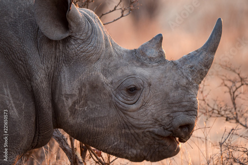 Tuinposter Neushoorn Rhinoceros in Zambezi Private Game Reserve, Zimbabwe