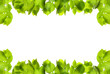 Frame of fresh green leaves with space for design on white background
