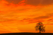 canvas print picture - Lonely tree on the hill at sunrise
