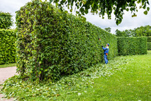 Man Is Cutting Hedge In The Pa...