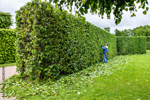 Fotografia Man is cutting hedge in the park