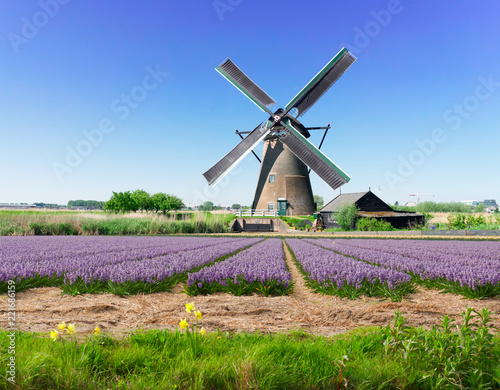 Papiers peints Con. ancienne landscape with traditional Dutch windmill with traditional blooming hyacinth filed, Netherlands