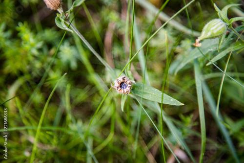 Letnia roślinność - 221686333