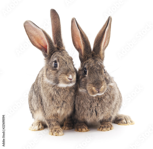 Two gray rabbits.