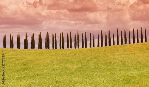 Foto op Aluminium Zalm Typical tuscan countryside with cypress.