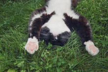 A Cute Black And White Tuxedo Cat Laying On Its Back Sleeping In The Grass