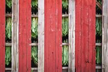 Open Slats In A Tobacco Barn In Rural Wisconsin Drying Tobacco