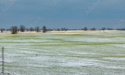 Winter fields in the snow. Winter. Wheat. Winter fields. South of Russia.