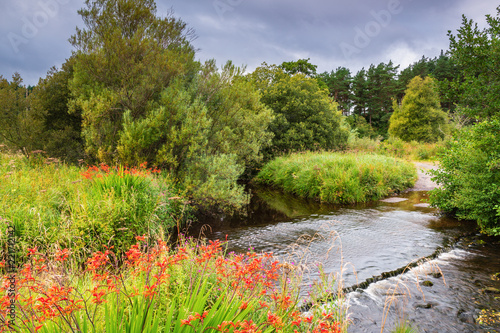 фотография  Wild Montbretia besides River Rede Ford / The crossing is close to Byrness in Re