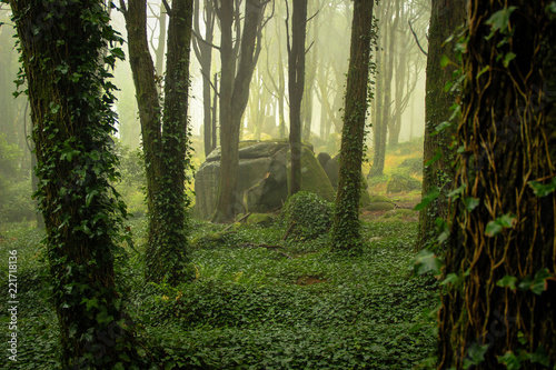 Beautiful old forest in fog