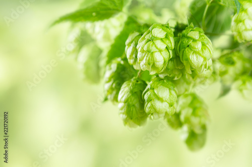 Poster Bier / Cider Branches of hops on blur green background, farm, beer ingredients, copy space