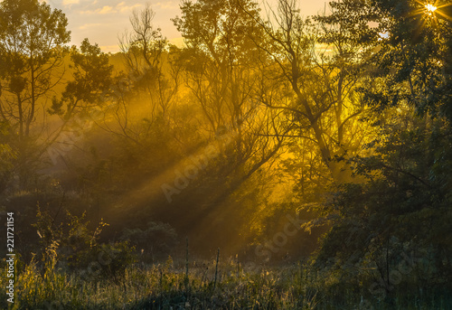 Papiers peints Forets Fog in the forest glade. Spring dawn. After a rainy night at dawn, the fog. South of Russia.