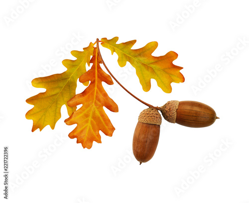 Autumn yellow and brown oak acorns and leaves