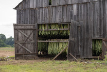Tobacco Drying Barn In New Eng...