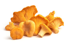 Raw Fresh Chanterelles Mushrooms, Isolated On White Background