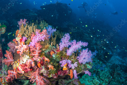 Photo  Colourful soft corals in South Andaman, Southern of Thailand