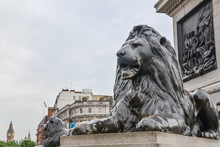 London, UK - July 10, 2014 - Lion Sculpture At The Base Of Nelson's Column In Trafalgar Square With Big Ben In The Background.