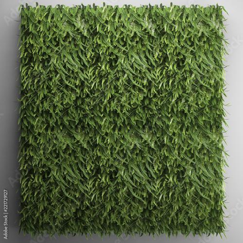 Wallpaper Mural vertical gardening fern