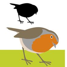Bird  Robin  Vector Illustration Flat Style Profile