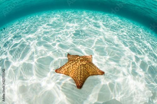 West Indian Starfish in Caribbean Sea Wallpaper Mural