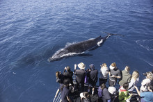 Whale Watchers Observing A Pai...
