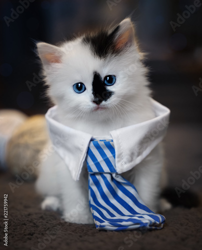 White collar kitten Canvas Print
