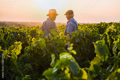 Fotomural  Two French winegrowers in their vines at sunset