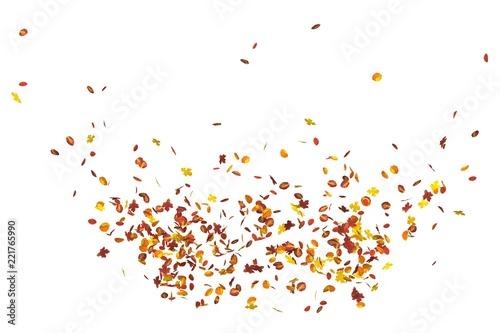 Canvas-taulu Autumn leaves isolated on white background 3D illustration