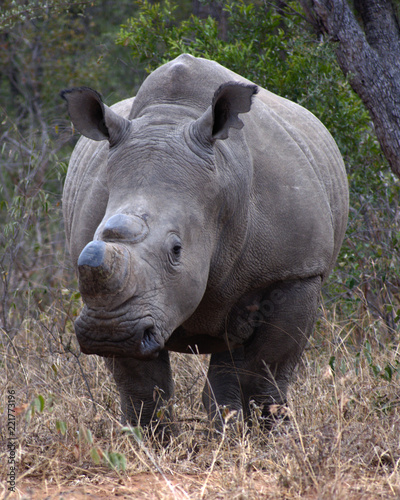 In de dag Neushoorn Rhino, South Africa
