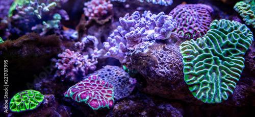 Photo Stands Coral reefs Underwater coral reef landscape background in the deep lilac ocean