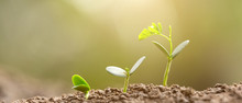 Agriculture Planting Seeding Growing,  Business Growht Up Concept. 21:9 Aspect Ratio