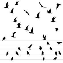 Flock Of Birds Sitting On Wire...