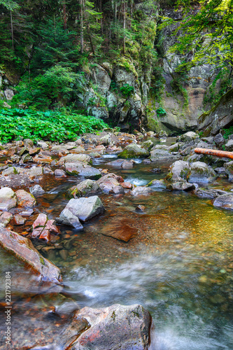 Fotobehang Rivier River in the forest. Beautiful natural landscape in the summer time
