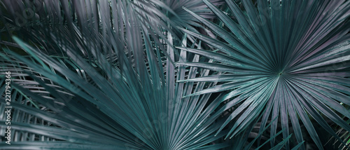 Banner of tropical leaves in dark soft colors. Concept of summer and travel agency, jungle theme and blog heading.