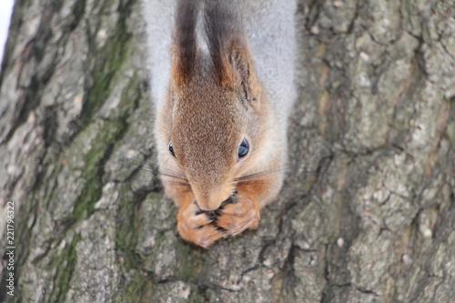 Foto op Plexiglas Eekhoorn squirrel