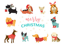 Collection Of Christmas Dogs, ...