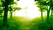 Path Through Magical Forest At Sunrise, Sunshine In Beautiful Fantasy Landscape
