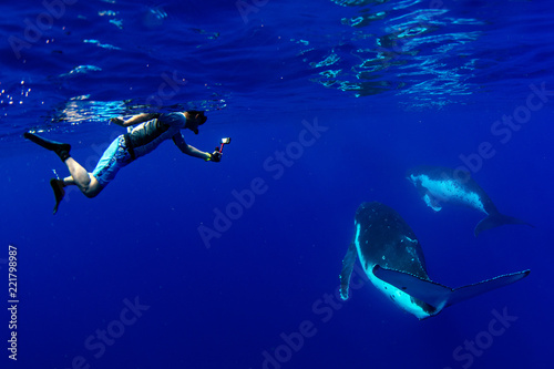 diving with Humpback whale underwater in Moorea French Polynesia