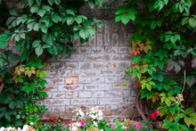 Beautiful Leaves, Wall And Leaves, Autumn