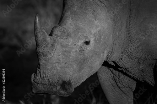 Tuinposter Neushoorn White Rhino in Black and White