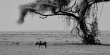 Lonely Gnu