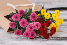 Beautiful Multicolored Chrysanthemum Flowers. Pink, Red And Yellow Golden-daisy Flowers. Close Up. Old White Wood Background.
