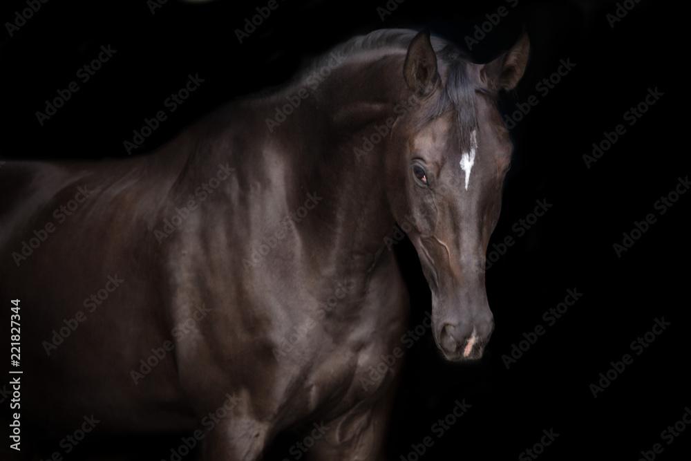 Fototapety, obrazy: Black horse portrait on black background