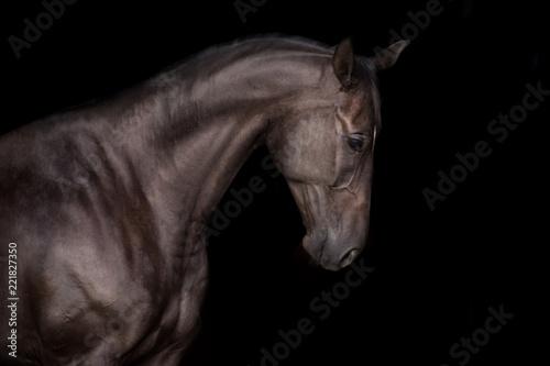 czarny-konski-portret-na-czarnym-backg